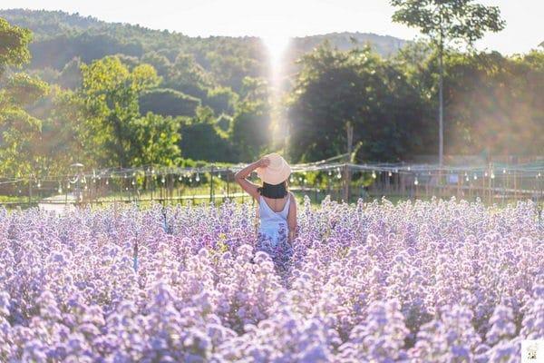 7 สวนดอกไม้เชียงใหม่ 2020 ที่สายถ่ายรูปห้ามพลาด